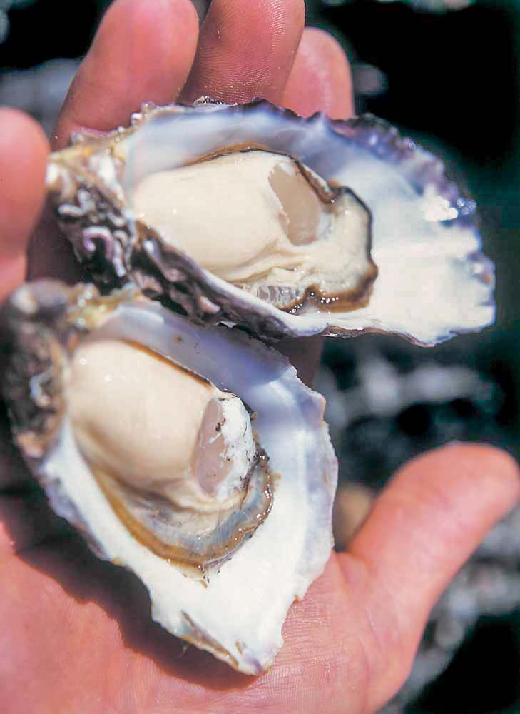 Gazander Coffin Bay Oysters. Commercial photography.